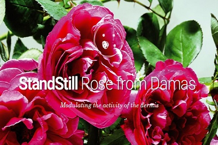 Plant cells from Rose from Damas to decrease wrinkles